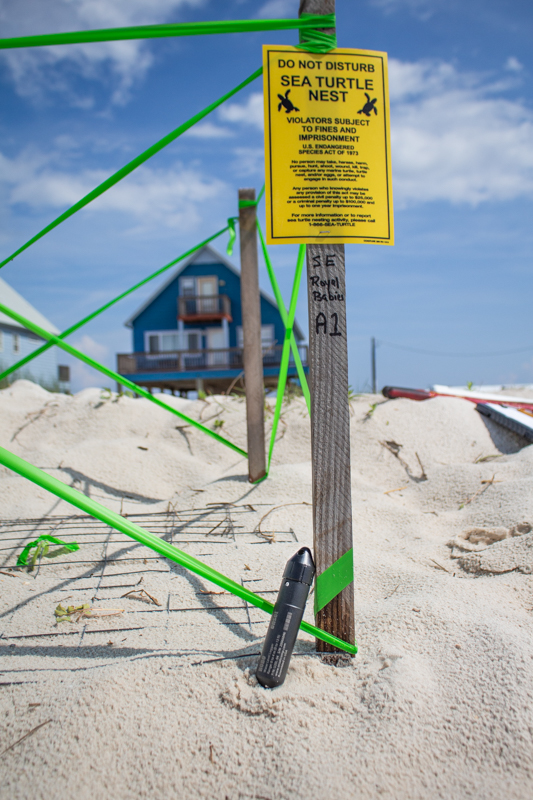 Sea turtle nesting site with HOBO data logger
