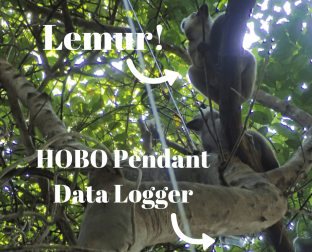 HOBO Pendant data logger in an outdoor application in Madagascar, next to a lemur!