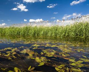May is American Wetlands Month
