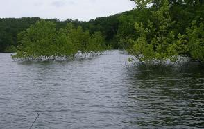 Advantages of the HOBO Water Level Logger