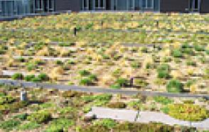 Blue and Green: A Study of Urban Green Roof Performance at the Indigo and Cyan Buildings in Portland, Oregon