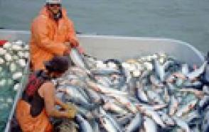 Data Loggers Preserve the Catch of the Day