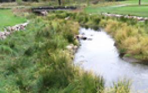 Study Points to Potentially Harmful Increase in Golf Stream Water Temperatures