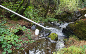 A study on the effects of flow enhancement on juvenile salmonids and the stream food web