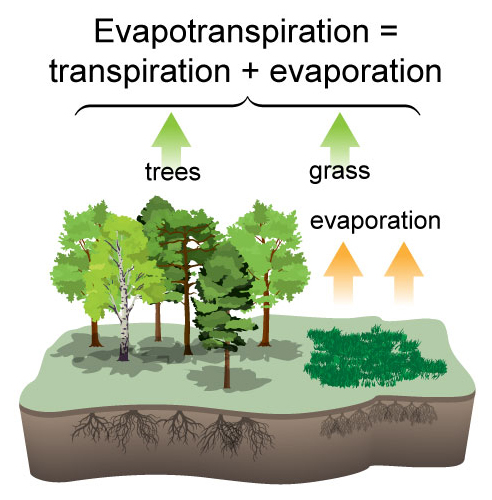 Evapotranspiration Info Graphic